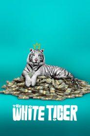 The White Tiger Movie Hindi Download Free | HdMp4Mania